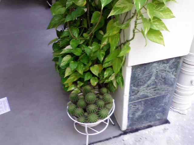 Feng shui money plant quotes - Money tree feng shui placement ...